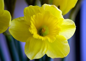 Top 12 Posts from 2012 on Spring Snow Publications