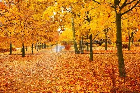 OrangePark_11503702-orange-park