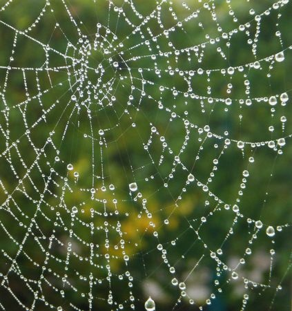 Taoist Pearls, Wisdom for Writers: Mist Dreams Me