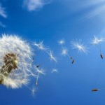 Tao Te Ching for Writers: Winds of Change
